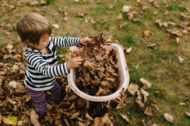 High angle view of a girl putting autumn leaves into a wheelbarrow