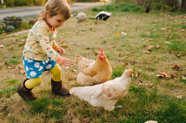 Young girl chasing the chickens in the backyard