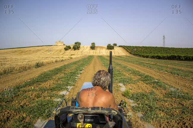 Man on tractor in a field of watermelons