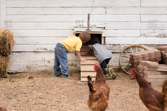 Young boys peeking into chicken coop