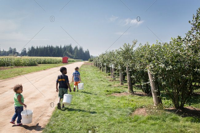 Children carrying buckets in a blueberry field