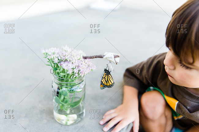 A boy examines a newly hatched butterfly