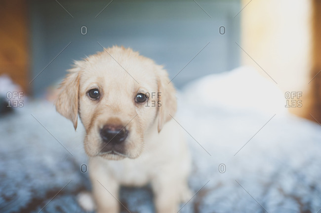 Portrait of a puppy
