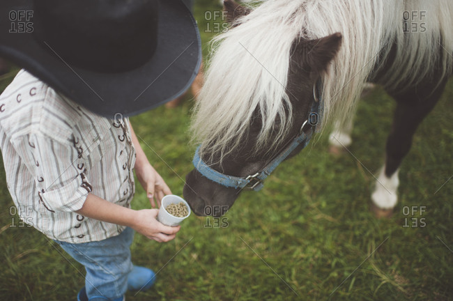 Boy feeding pony