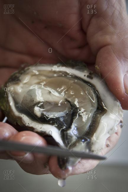 A man shucks an oyster