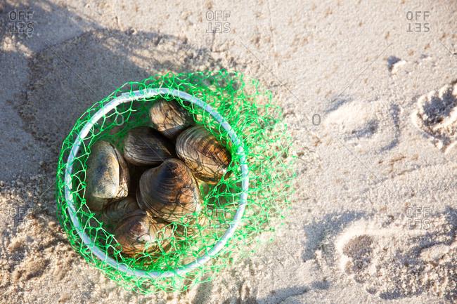 Clams in a net on the beach