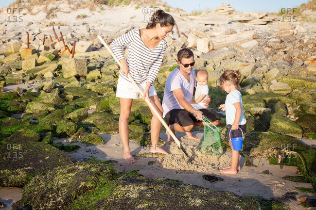 Family collecting clams on the shore