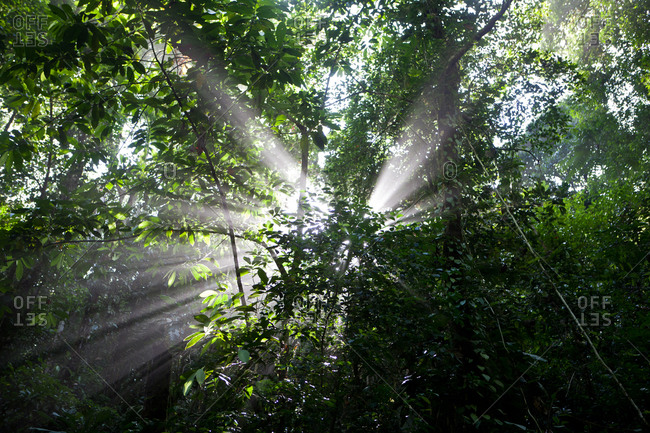 Sun rays through the Colombian Jungle