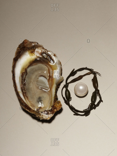 Studio shot of a pearl with mollusk shell