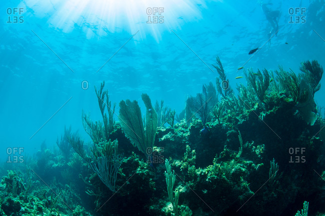Sunlight on coral in Caribbean
