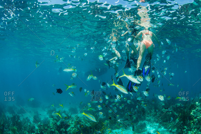 Swimmers among sergeant major fish