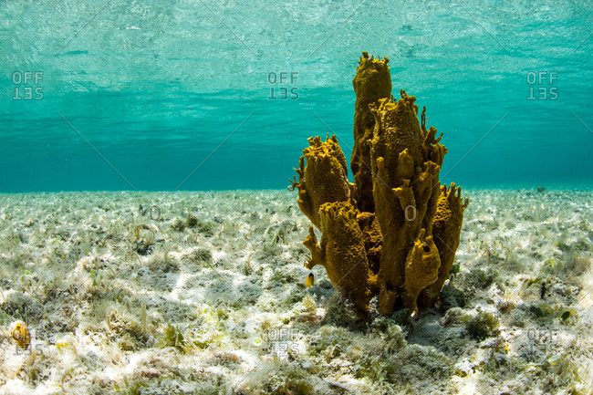 A single coral in shallow water