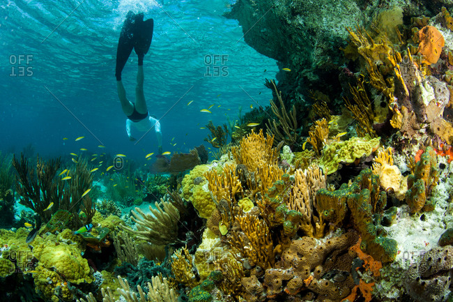 Swimmer floating above coral bed