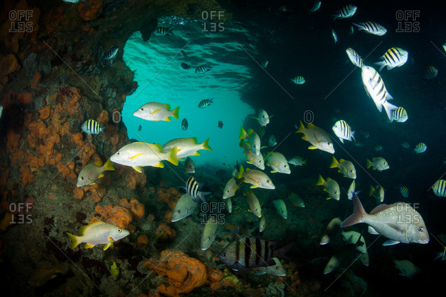 Various fish in underwater rock cove