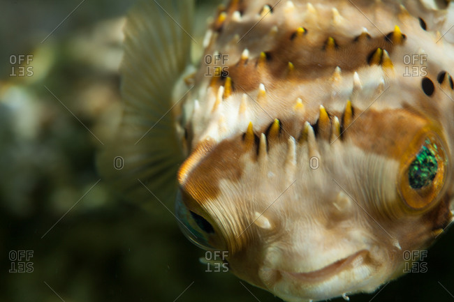 Close up of fish face