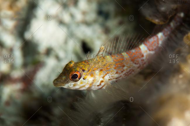 Spotted fish near ocean floor