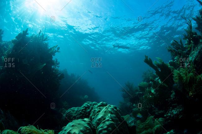 Coral reef seen underwater