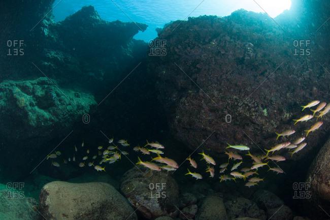 School of fish in coral rocks