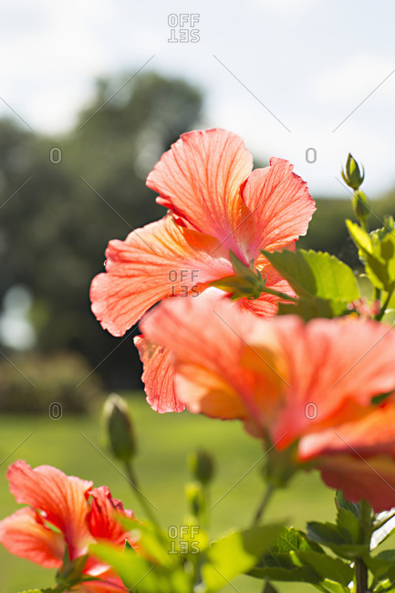 Blooming flower in a park