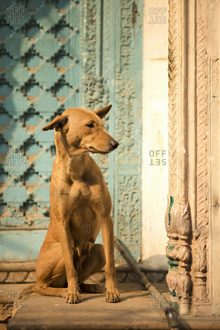 Dog sitting at a doorway in Old Delhi, India