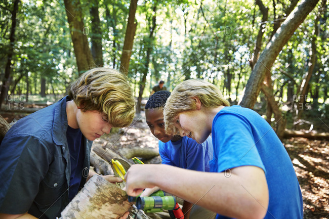 Young boys examining a tree trunk in a forest