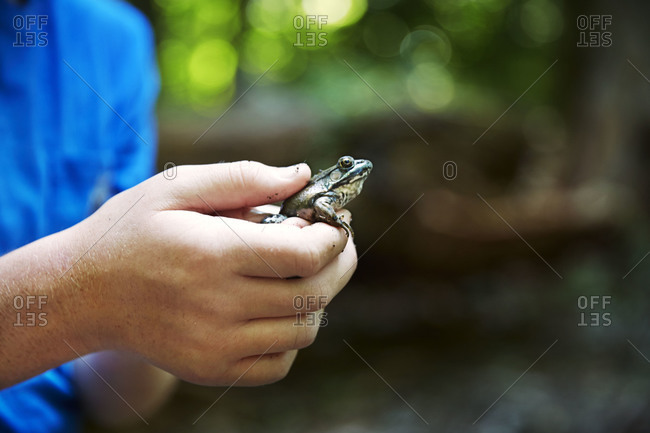 Young boy holding a small frog in his hands