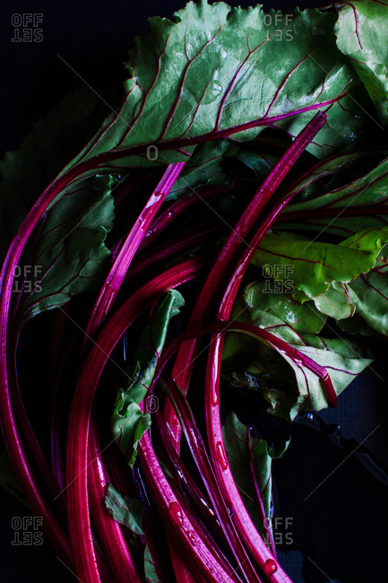Studio shot of the leaves of a beetroot