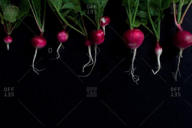 Studio shot of freshly picked radishes