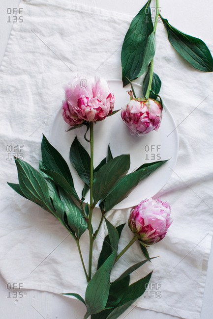 Peonies over a white plate
