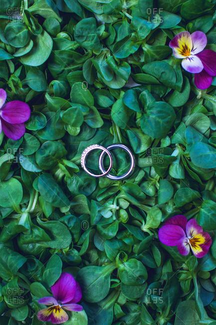 Wedding rings over green leaves