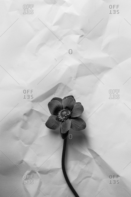 Black and white flower over paper