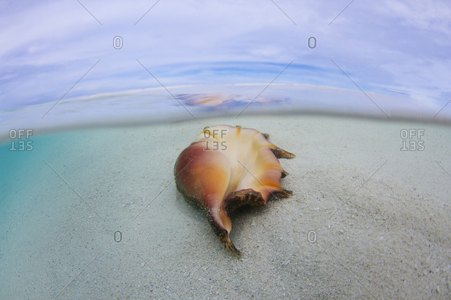 A shell lays on the beach