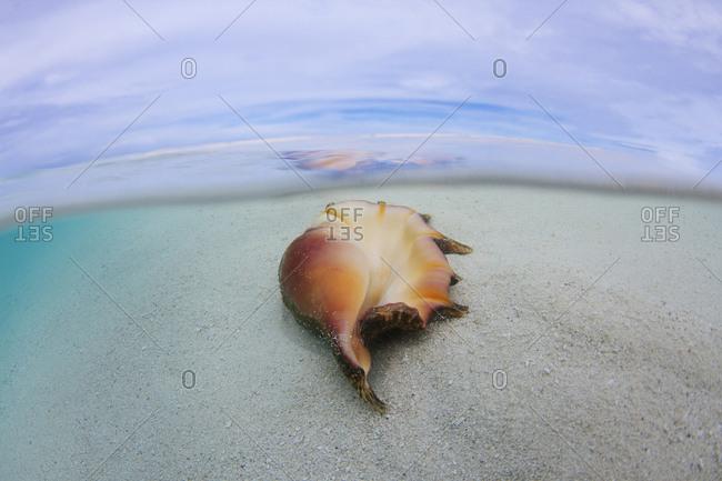 A shell lays on the beach