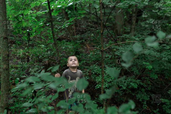 Boy looking up at trees in a forest