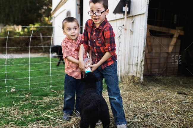 Brothers feeding a lamb together