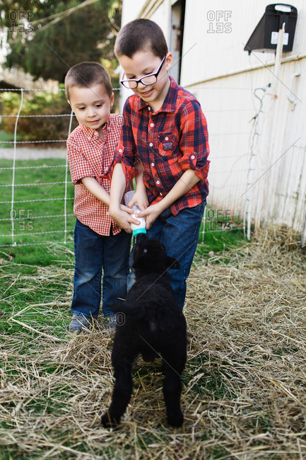 Children feeding a lamb together