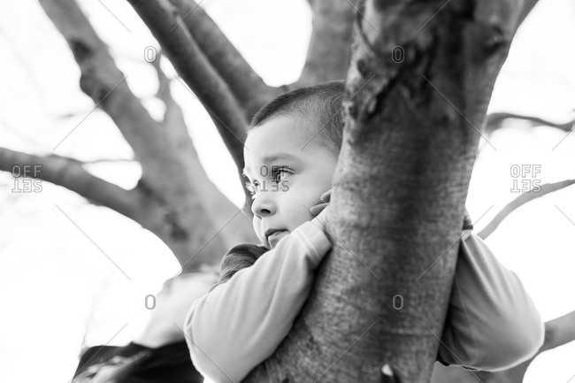 Close up of a boy on top of a tree