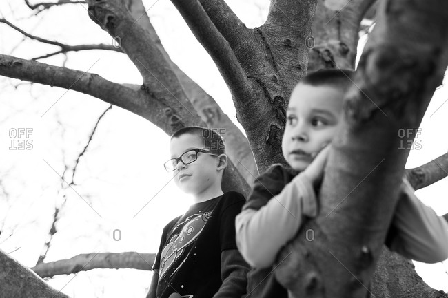 Brothers on top of a tree