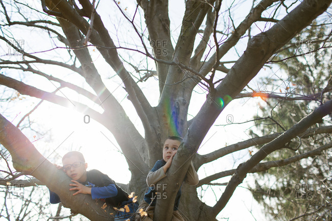 Children resting on the branches of a tree