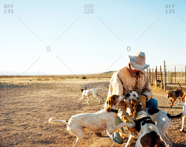 Cowboy with hound dogs