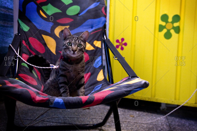 A cat sits on a travel chair at an Italian campsite, Torre del Lago, Italy