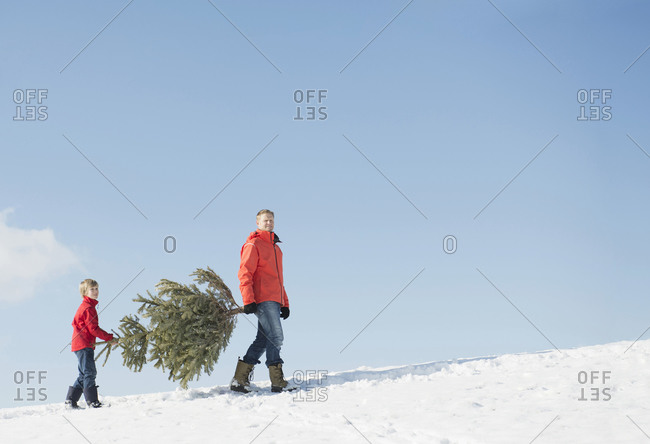 Father and son carrying spruce