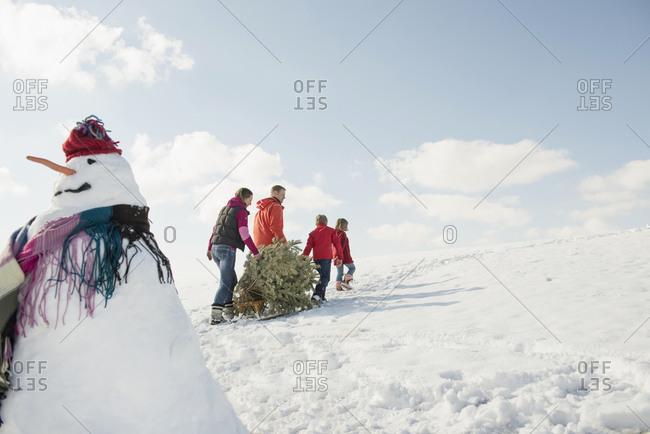 Family pulling spruce on sledge