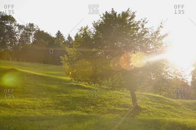 View of meadow at sunset, Salzburger Land, Austria