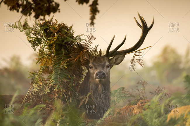 Portrait of a stag in a forest