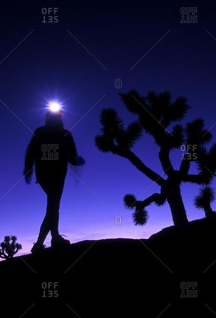 Hiker using headlamp for hiking at night through Joshua Tree National Park, California