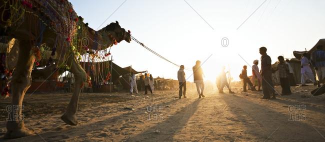 Pushkar Camel Fair at sunrise in Rajasthan, India