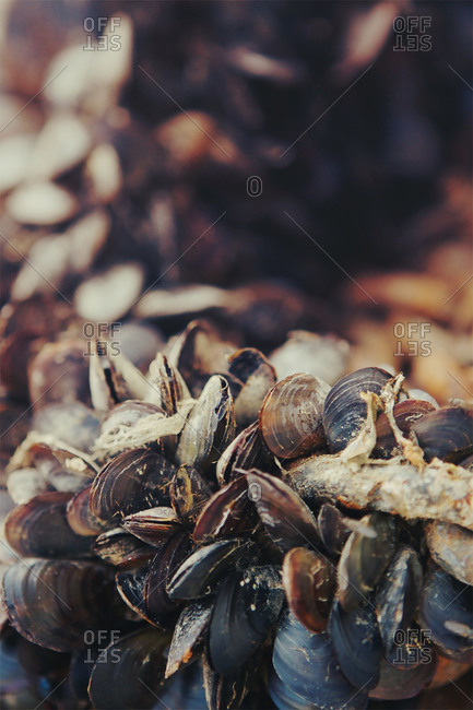 Close up of clams