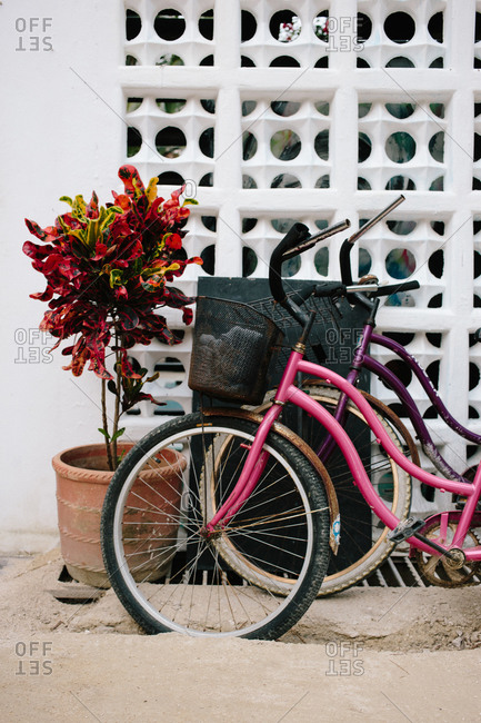 Potted plant with bicycles on a street