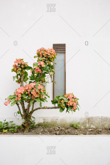 View of a plant in bloom at a window